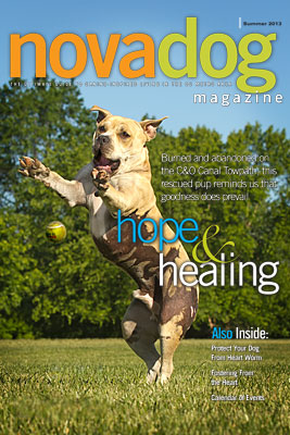 novadog_cover_summer_2013