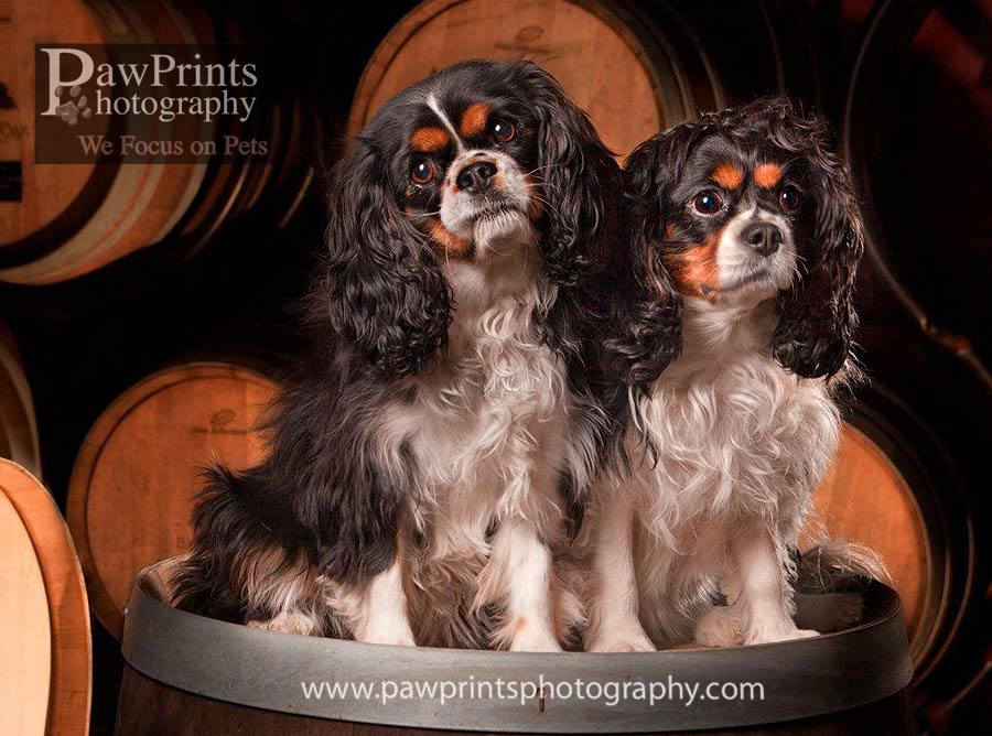 cavaliers with wine barrels