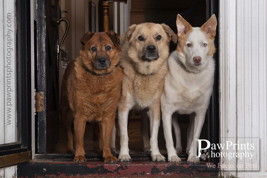 three_dogs_door_6578a